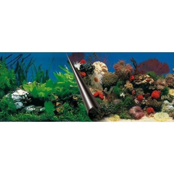 EBI - 60x30cm - Stone / Coral