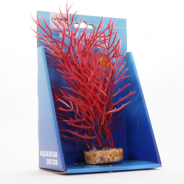 YUSEE - Rotala Colorata 20cm