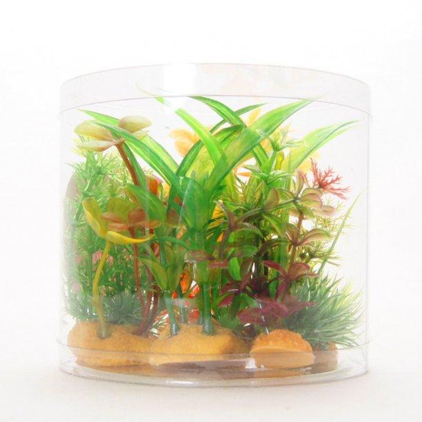 YUSEE - Sæt af Planter MID - 7-10cm